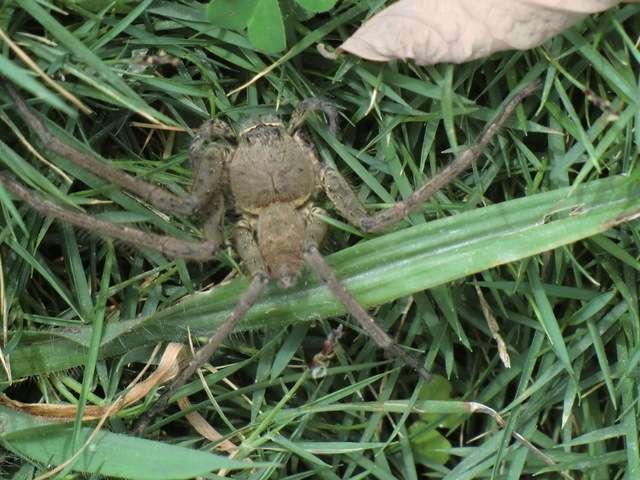 die Spinne saß am Straßenrand....