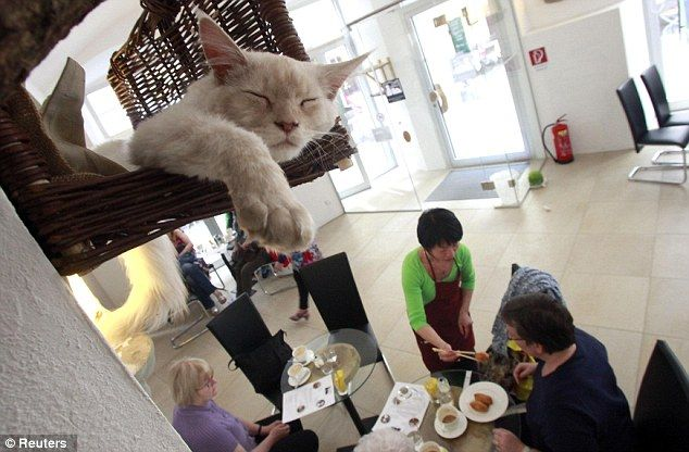 article214612112f869c30 - En Viena abren el primer café para gatos de Europa