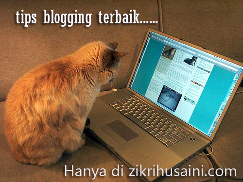 cat blogging, kucing main computer, cat blogging, picture cat,<br /> kucing cute