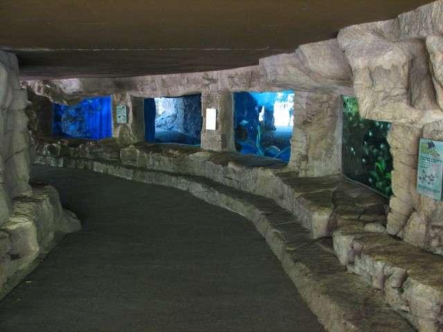 Review Of San Antonio Zoo And Aquarium San Antonio Zoo